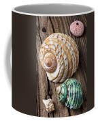 Sea Shells With Urchin  Coffee Mug