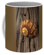 Sea Snail Shell On Old Wood Coffee Mug