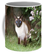 Seal Point Siamese Cat Coffee Mug