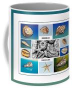 Seashell Collection 3 - Collage Coffee Mug