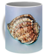 Seashell Wall Art 9 - Harpa Ventricosa Coffee Mug