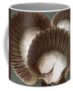 Seashells Spectacular No 22 Coffee Mug by Ben and Raisa Gertsberg