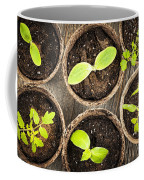 Seedlings Growing In Peat Moss Pots Coffee Mug