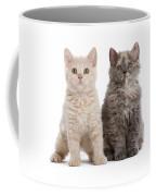 Selkirk Rex Kittens Coffee Mug
