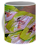 Selling Betel Nut For Chewing In Tachilek-burma Coffee Mug
