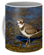 Semipalmated Plover Coffee Mug