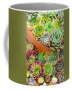 Sempervivum Or House Leeks Mixed  Coffee Mug