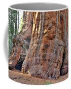 Sequoia Tree Base Coffee Mug