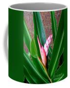 Shell Ginger Emerging Coffee Mug
