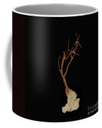 Shell Study 3 Black Coffee Mug