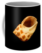 Shells Of The Gulf Coast 8 Coffee Mug