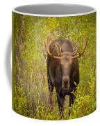 Shiras In The Willows Coffee Mug