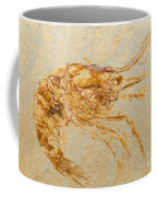 Shrimp Fossil Coffee Mug
