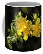 Shrubby St Johnswort Dsmf094 Coffee Mug