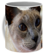 Siamese Cat Peers Into Unknown Coffee Mug