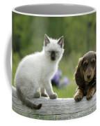Siamese Kitten And Dachshund Puppy Coffee Mug