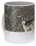 Siberian Husky 20 Coffee Mug