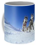 Siberian Husky Dogs Coffee Mug