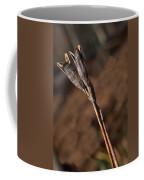 Siberian Iris Seed Pod 1 Coffee Mug