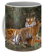 Siberian Tiger Cub Guarding Mom Wildlife Rescue Coffee Mug