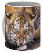 Siberian Tiger Cub Panthera Tigris Altaicia Wildlife Rescue Coffee Mug