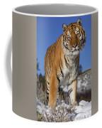 Siberian Tiger No. 1 Coffee Mug