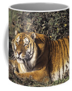 Siberian Tiger Stalking Endangered Species Wildlife Rescue Coffee Mug