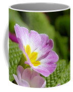 Side View Of A Spring Pansy Coffee Mug