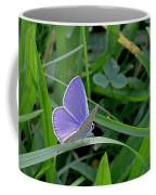 Silver Studded Blue Butterfly Coffee Mug