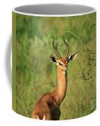 Single Grant's Gazelle Coffee Mug