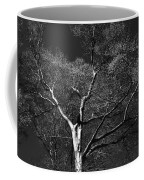 Single Tree With New Spring Leaves In Black And White Coffee Mug