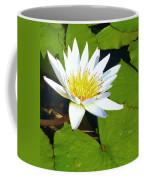 Single White Water Lily Coffee Mug