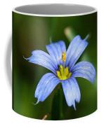 Sisyrinchium Angustifolium Coffee Mug