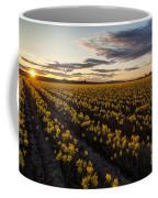 Skagit Daffodils Sunset Sunstar Coffee Mug