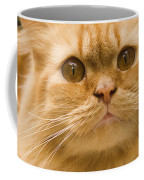 Skc 1480 Inquisitive Coffee Mug