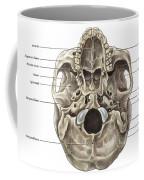 Skull Inferior View Coffee Mug