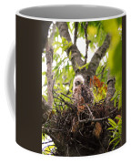 Sleeping Baby Red Shouldered Hawk Coffee Mug