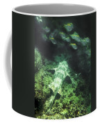 Sleeping Wobbegong And School Of Fish Coffee Mug