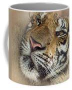 Sleepy Tiger Portrait Coffee Mug