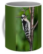 Sleepy Woodpecker Coffee Mug