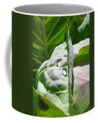 Sliced Cabbage Coffee Mug