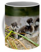 Smew Ducklings On Shore Coffee Mug