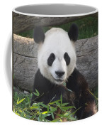 Smiling Giant Panda Coffee Mug
