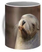 Smug Sea Lion Coffee Mug