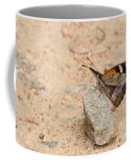 Snout Butterfly  Coffee Mug