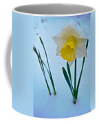 Snow-capped Daffodil On May 21 Near Des Chutes National Forest-or  Coffee Mug