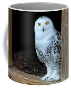 Snow Owl Coffee Mug