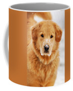 Snowy Golden Retriever Coffee Mug by Christina Rollo