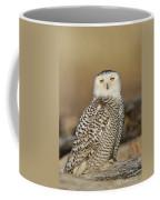 Snowy Owl Female Coffee Mug