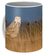 Snowy Owl Morning Coffee Mug